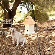 Best 5 Anti Bark Birdhouses For Dog Barking Control Reviews