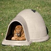 Top 5 Whimsical Style Dog Houses On The Market In 2021 Reviews