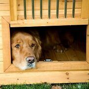 Best 5 Barn-Style Dog Houses To Pick From In 2021 Reviews