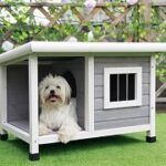 Best 5 Dog Houses For Hot Weather & Climates Reviews + Guide