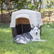 Best 5 Plastic Dog Houses For You To Buy In 2021 Reviews