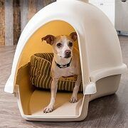 Top 5 Cheap & Inexpensive Dog Houses For Sale In 2021 Reviews