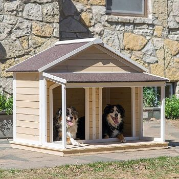 great-dane-dog-house